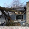 Tree damage: Does insurance cover a fallen tree?