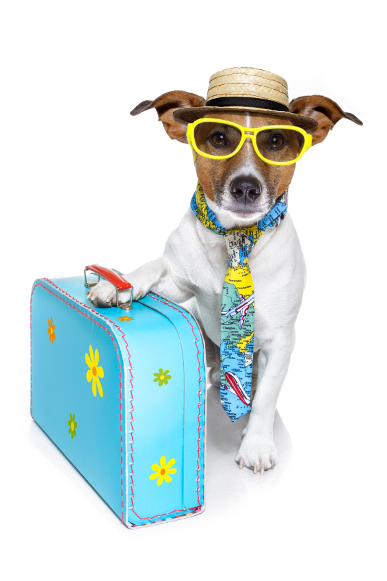 dog in sunglasses with suitcase